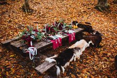 Autumn location, autumn decor, rocking chairs royalty free stock photography