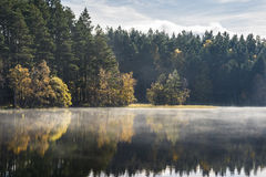 Autumn on Loch Garten in Scotland. Autumn trees and mist on Loch Garten in the Cairngorms National Park in Scotland royalty free stock images