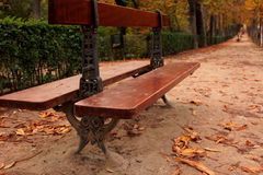 Autumn. Lonely banks and fallen leaves Stock Photo