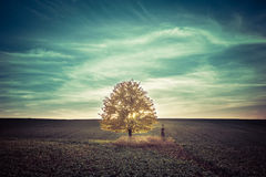 Autumn lonely linden and cross Stock Images