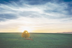 Autumn lonely linden and cross Royalty Free Stock Photo
