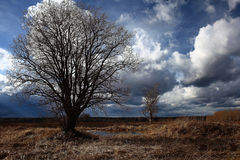 Autumn lonely tree in field Royalty Free Stock Image