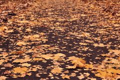 Autumn loose road with yellow leaves of maple, birch, oak and aspen Royalty Free Stock Photos