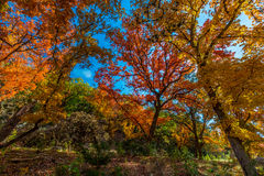 Autumn at Lost Maples State Park, Texas Royalty Free Stock Photo