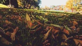 Autumn Love fotografia de stock royalty free