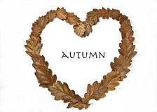 Autumn love. Oak leafes formed as a heart on white background Royalty Free Stock Photos