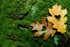 Autumn Love Royaltyfri Foto