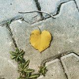 Autumn. Love leaves on Autumn Stock Image