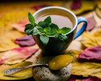 Autumn lovely honey mood to life royalty free stock images