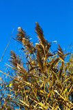Autumn. Lush dry grass on a background of the autumn sky royalty free stock image