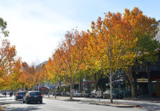 Autumn in Lygon Street, Melbourne stock image