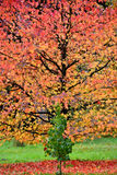 Autumn at Lynford Arboretum Royalty Free Stock Photo