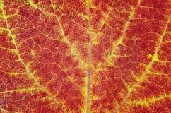 Free Autumn Macro Leaf Royalty Free Stock Photo - 27060895