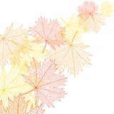 Autumn macro leaf of maple. Vector bacground Stock Images