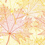 Autumn macro leaf of maple. Vector bacground Royalty Free Stock Photos