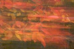 Autumn Magic. Autumn leaves panned during long exposure stock photos