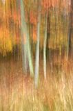 Autumn Magic II. Autumn woodland scene with movement during long exposure royalty free stock photo