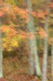 Autumn Magic III. Autumn woodland scene with movement during long exposure royalty free stock photos