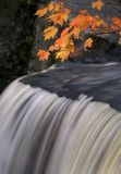 Autumn Magic IV. Autumn Maple leaves hanging over waterfall stock images