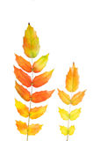 Autumn mahonia Stock Photo