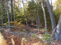 Autumn Maine Forest With Changing Foliage royalty free stock photos