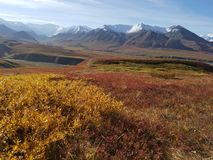 The Wilderness of Denali stock image