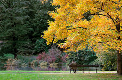 Autumn man on bench. Single man sitting on a bench in park, waiting, holding newspaper, thinking Stock Photos