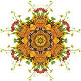 Autumn mandala. Autumn floral mandala with flowers and pumpkin Stock Image