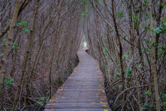 Autumn in mangrove forest with wood walkway bridge and leaves of tree.Phetchaburi ,Thailand. Stock Images