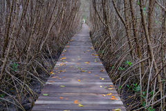 Autumn in mangrove forest with wood walkway bridge and leaves of tree.Phetchaburi ,Thailand. Royalty Free Stock Photo