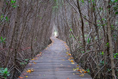 Autumn in mangrove forest with wood walkway bridge and leaves of tree.Phetchaburi ,Thailand. Stock Image