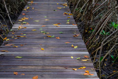 Autumn in mangrove forest with wood walkway bridge and leaves of tree.Phetchaburi ,Thailand. Stock Photos