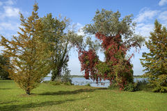 Autumn. Mantova,Italy,some trees in autumn colors in a public park Stock Images