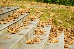 Autumn. Many fallen leaves in Autumn Royalty Free Stock Photography