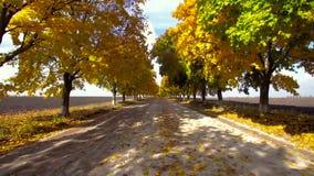Autumn maple alley 2 stock video