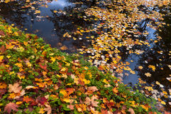 Autumn Maple And Linden Leaves Royalty Free Stock Images