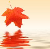 Autumn maple background Stock Photography