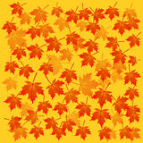 Autumn maple background Stock Images