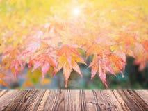 Autumn maple blur background Royalty Free Stock Photos