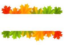 Autumn maple border Stock Image