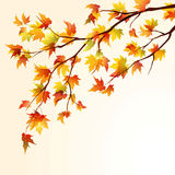 Autumn maple branch Stock Images