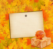 Autumn maple branch with gift box Stock Photo