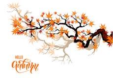 Free Autumn Maple Branches Stock Photo - 99316500