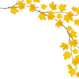 Autumn maple branches with yellow leaves Royalty Free Stock Images