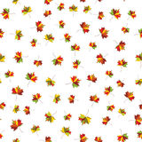 Autumn maple colorful leave. Welcome to school vector Seamless pattern for cushion, pillow, bandanna, kerchief, shawl fabric print Stock Images