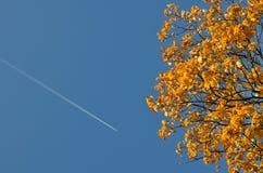 Autumn Maple crown stock photos