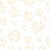 Autumn Maple deja el modelo Foto de archivo libre de regalías