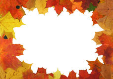 Autumn maple frame royalty free stock images