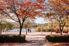 Autumn maple and lake at Incheon Grand Park in Korea