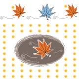 Autumn Maple lascia il modello Immagine Stock